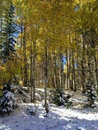 Kebler Pass: Beautiful aspens!