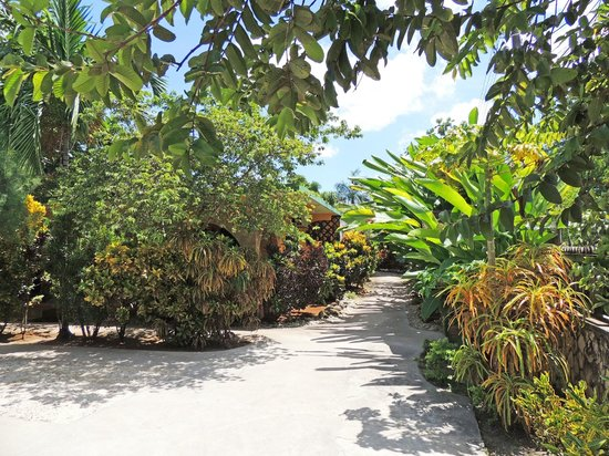 Sunrise Club: Enchanted walkway garden