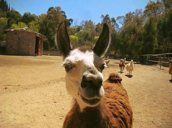 Hostel Simplemente Mendoza : En Mendoza Zoo