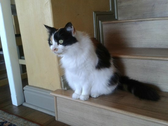 Dolphin Inn Guesthouse, Mouille Point: the lovely cat in Dolphin inn