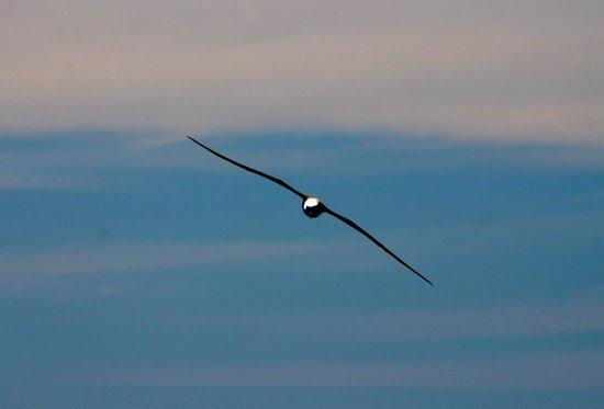 Manly Ocean Adventures: Albatross...