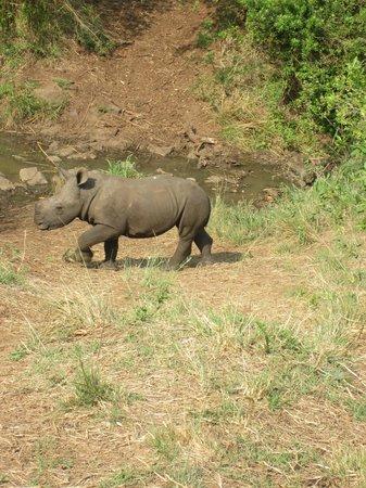 Heritage Tours & Safaris: Baby Rhino