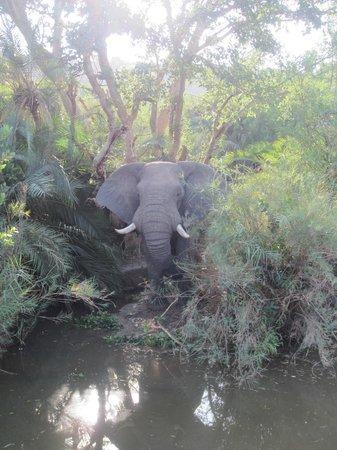 Heritage Tours & Safaris: Bull elephant
