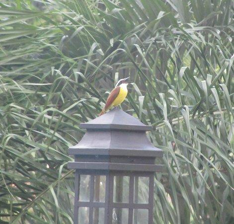 Costa Rica Marriott Hotel San Jose: Pretty bird singing by the pool