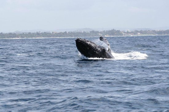 Deep Sea Fishing : While fishing in Mombasa we spotted this Humpback Whale