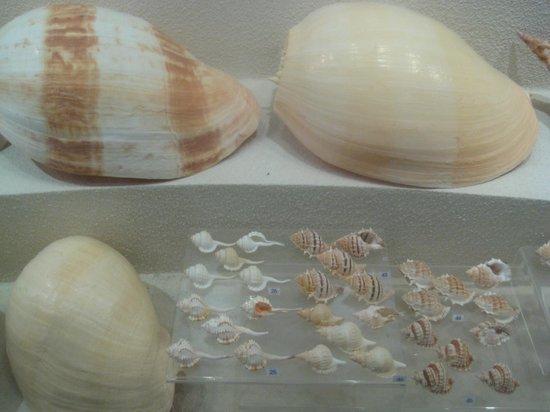 Bangkok Seashell Museum: one shell two shells, small shells, big shells