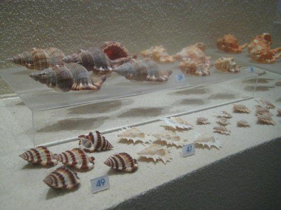 Bangkok Seashell Museum: puuuurty shells
