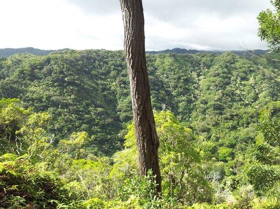 """Aiea Loop Trail: """"Scenic"""" overlook"""
