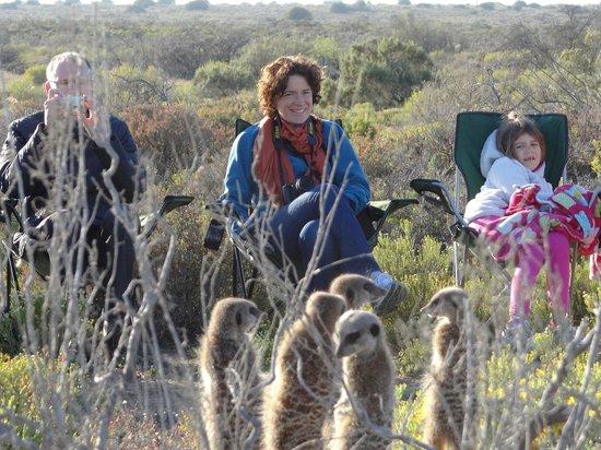 De Zeekoe Guest Farm: Meerkat Magic
