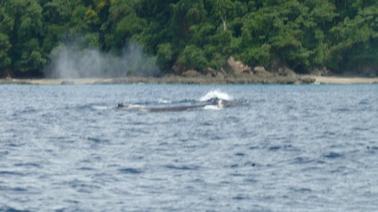 Drake Bay, Costa Rica: baleine