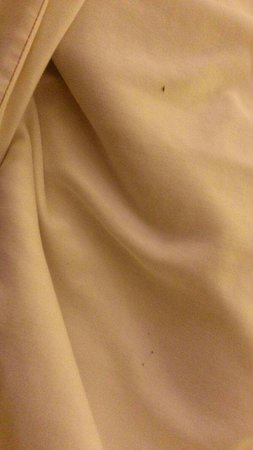 Ramada West Atlantic City : Stain on sheets