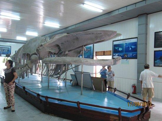 National Oceanographic Museum of Vietnam: Big