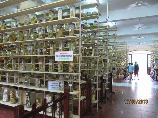 National Oceanographic Museum of Vietnam: Fish specimen