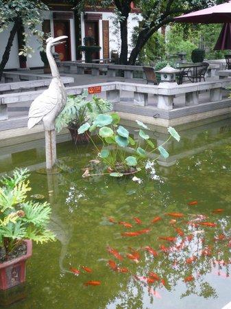 Tang Dynasty Art Garden Hotel : Fish Pond