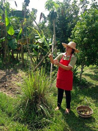 ไทย ฟาร์ม คุกกิ้งสคูล: Outdoor Garden with our Teacher EmBee