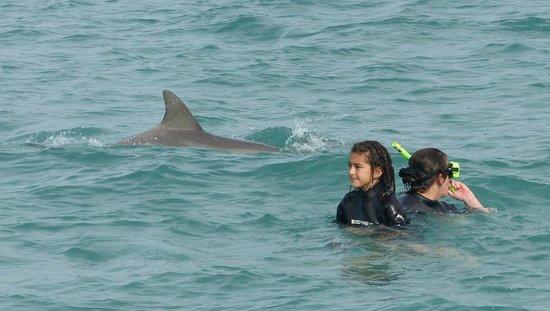Kangaroo Island Marine Adventures: We had about 12 dolphins swimming around and under us