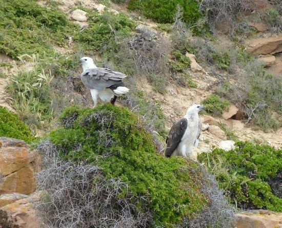 Kangaroo Island Marine Adventures: Beautiful wildlife