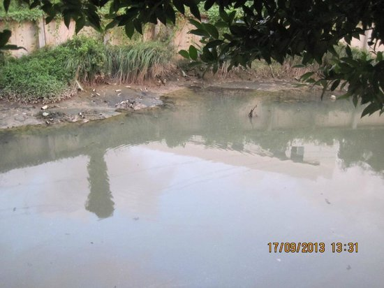 Patong Paradee Resort: Polluted, smelly water next to hotel