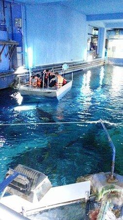 ซีไลฟ์ แบงคอก โอเชี่ยน เวิร์ล: Glass bottom boat adventure