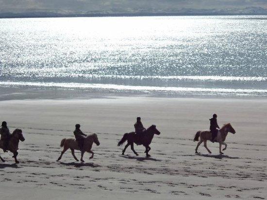 Akra Guesthouse: horses at Langasand