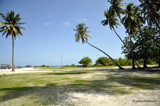 Just Surf Villa & Lodge Maldives: island scene