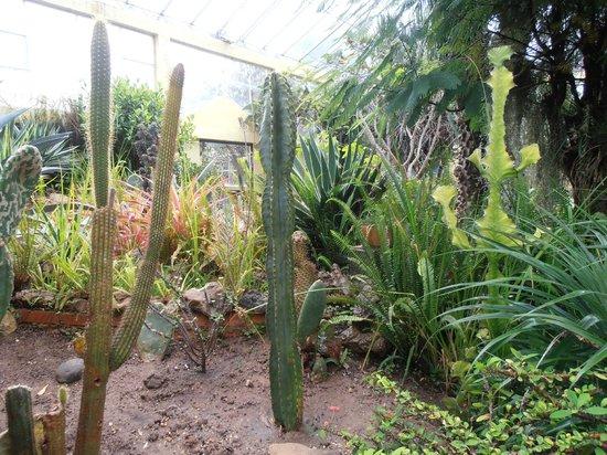 Invernadero - Picture of Jardin Botanico de Bogota Jose Celestino ...