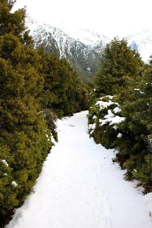 Kea Point Track: Trail