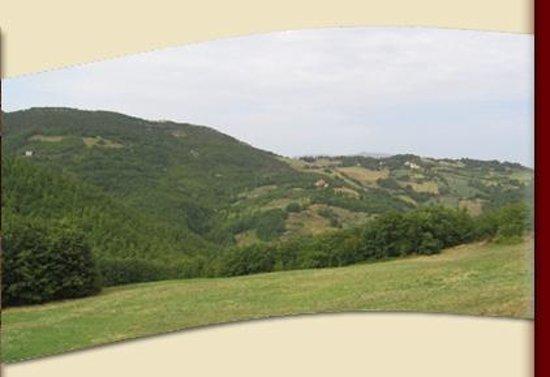 Agriturismo Castelsenese: Panorama