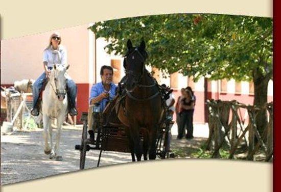 Agriturismo Castelsenese: Il maneggio con cavalli, pony e vari calessini