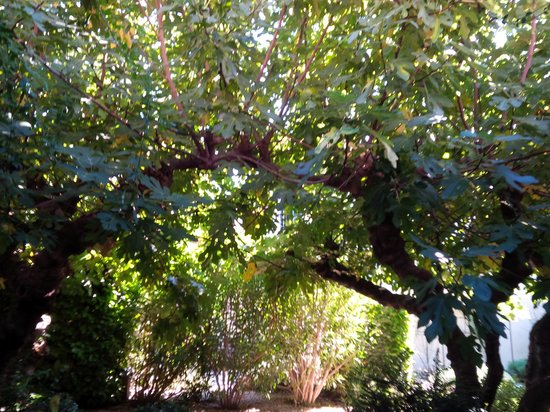 Hotel Sous les Figuiers: Fig trees in front of patio