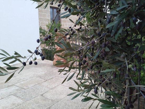 Masseria Ruri Pulcra Hotel & Resort: olives