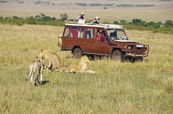 Nalepo Mara Camp: Unrivaled wildlife viewing