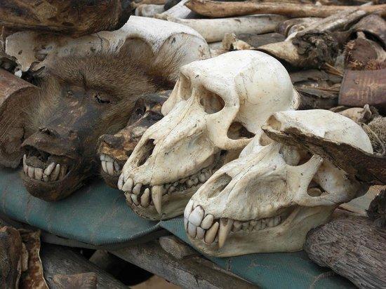 Marché aux fétiches : Crânes
