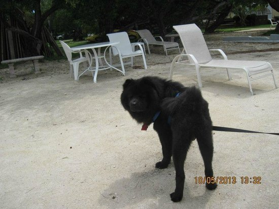 White Gate Court: Our dog on the beach area with us