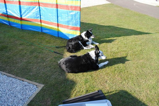 Trethem Mill Touring Park: The Boys Enjoying the Sun 2013