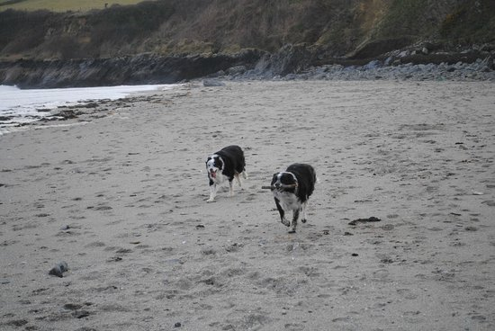 Trethem Mill Touring Park: The Boys on the Beach - Very Exclusive!