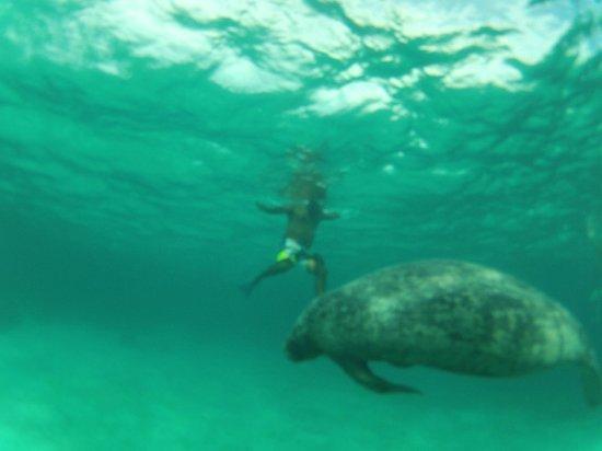 Caveman Snorkeling Tours: Manatees @