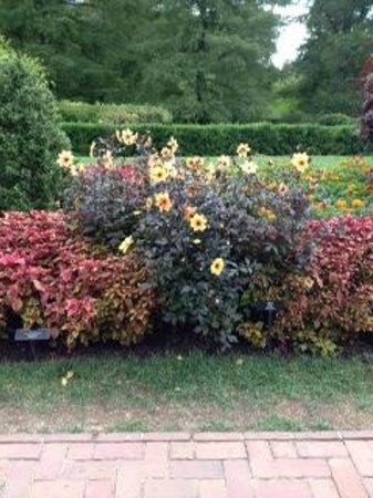 Longwood Gardens: fall gardens