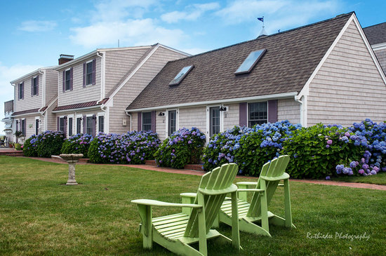 Inn On The Beach: Hydrangeas in bloom