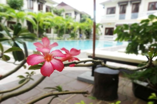 Hoi An Green Field Villas: Pool