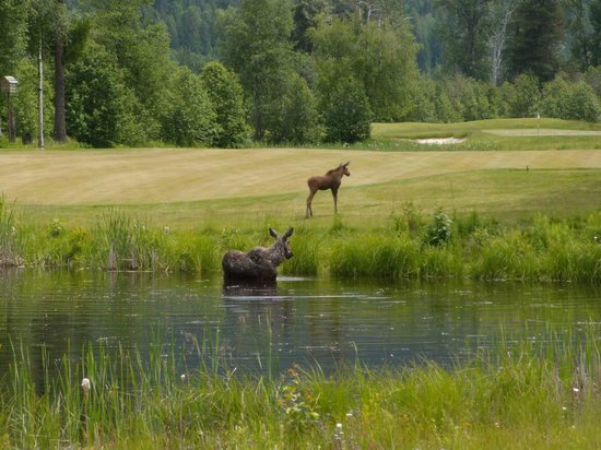 Hidden Lakes Golf Resort: You may be delayed a bit by the abundant wildlife.