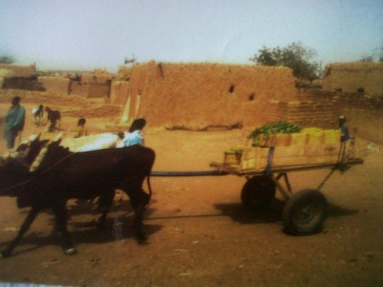 Níger: The use of Donkey is one mode of transportation in Galmi Niger Sahara