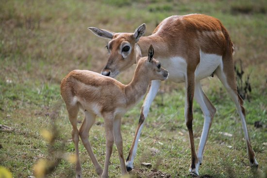 Promised Land ZOO : brand new baby