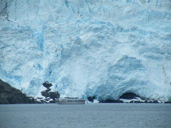 Alaska Saltwater Lodge Small Group Whale Watching, Wildlife & Glacier Tour : Glacier