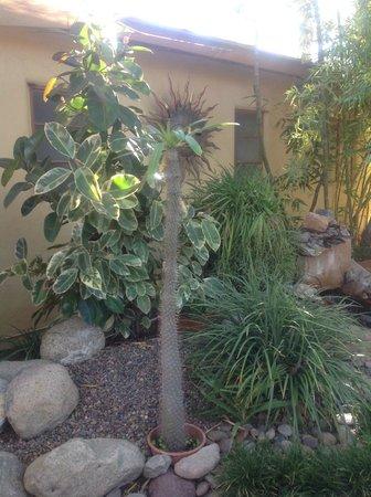 El Mirasol Villas: cactus