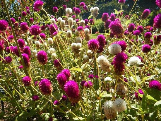 Huntsville Botanical Garden : Fall flowers
