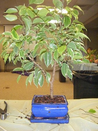 Huntsville Botanical Garden: Bonsai class