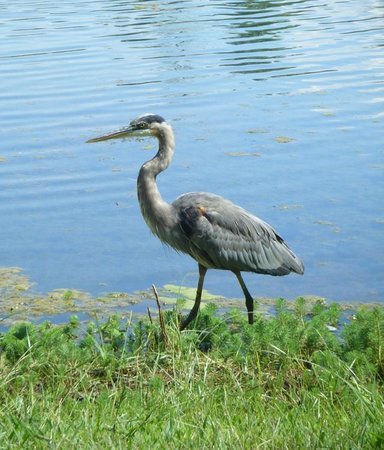 Huntsville Botanical Garden: Lake