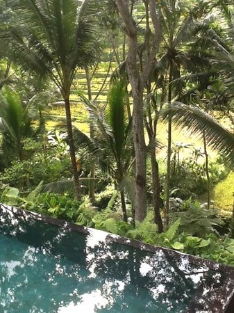 COMO Shambhala Estate: Rice Paddy View from Pool