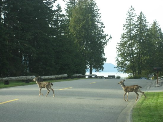 Anacortes Ship Harbor Inn: We were greeted by a mother and two fawns as we entered Washington Park